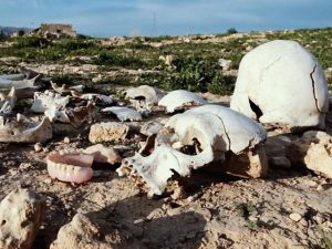 Many Mass Graves are Found Around SINJAR